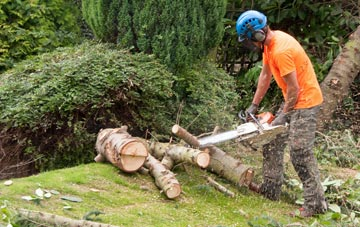 additional services offered by Maidenhead tree surgeons