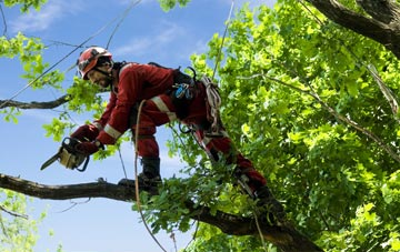 find trusted rated Maidenhead tree surgeons in Berkshire