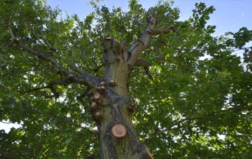 what is Maidenhead tree surgery?